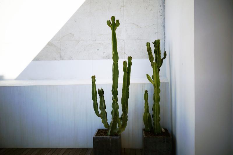 kaktus dachterrasse suite hotel balanguera