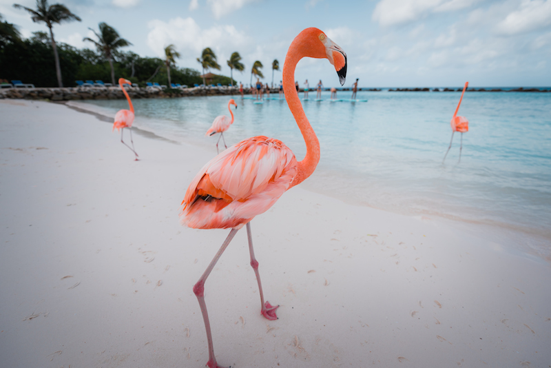 flamingos yoga renaissance private island aruba