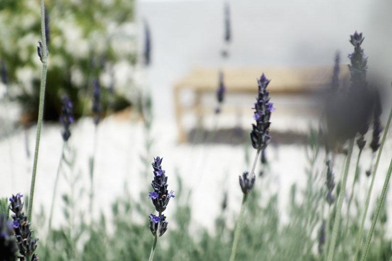 Lavendel-Garten-Villa-Zoe
