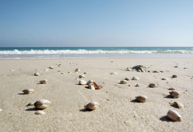 Muscheln-Strand-Algarve