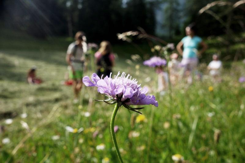 Wanderung-Yogatage-Seefeld